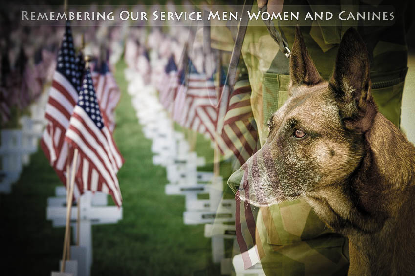 Memorial Day Images Service Dog
